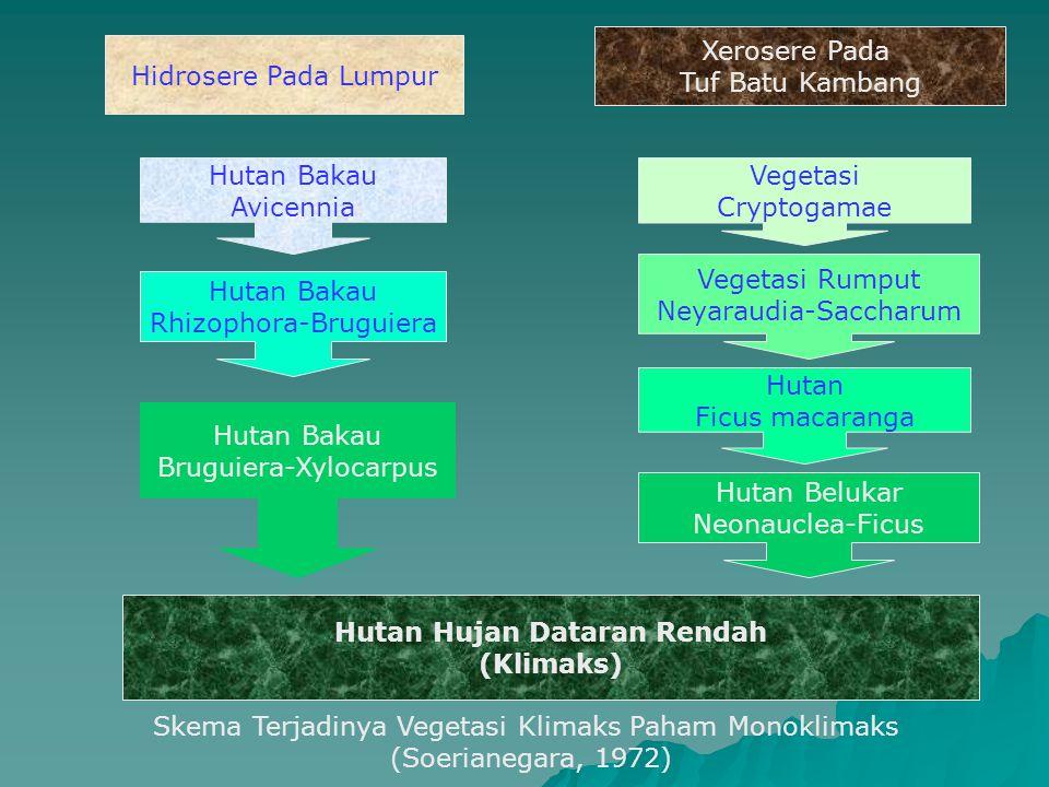 Hutan Bakau Avicennia Hutan Bakau Rhizophora-Bruguiera Hutan Bakau Bruguiera-Xylocarpus Hidrosere Pada Lumpur Vegetasi Cryptogamae Vegetasi Rumput Ney