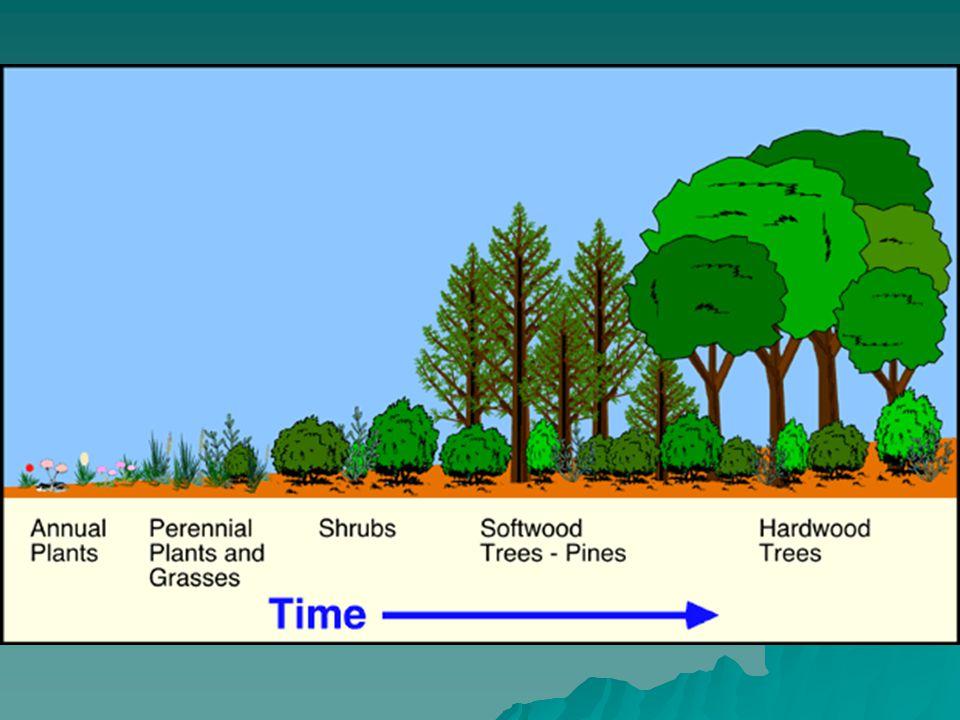Struktur diameter plenter (huruf J terbalik ) Sedikit batang yang mulus, pohon-pohon besar sering bolong Hanya sedikit (0-20%) jenis pohon niagawi, volume terjual sekitar 0-20 m3/ha, kecuali hutan dipterocarpaceae yang mengandung banyak kayu seragam.