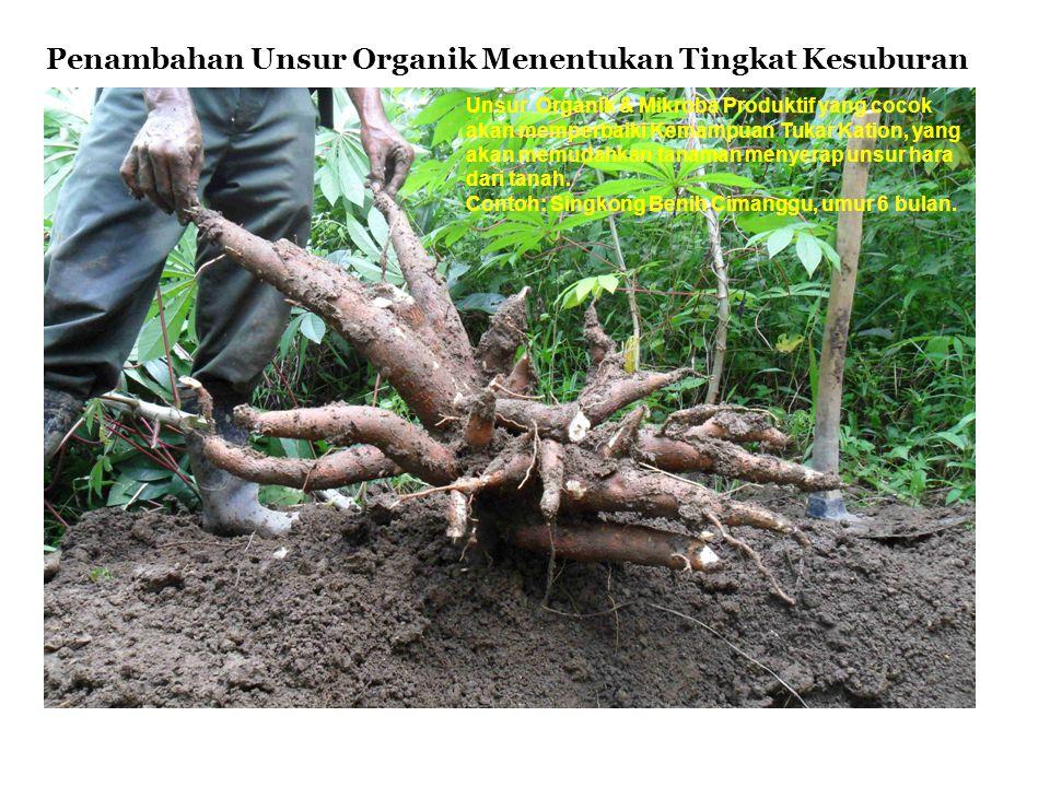 Penambahan Unsur Organik Menentukan Tingkat Kesuburan Unsur Organik & Mikroba Produktif yang cocok akan memperbaiki Kemampuan Tukar Kation, yang akan