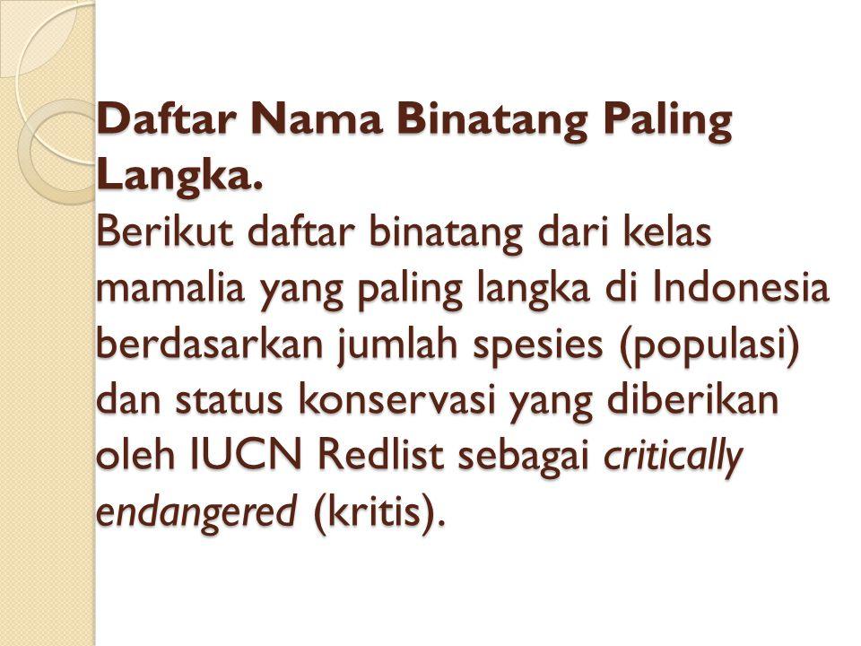Daftar Nama Binatang Paling Langka. Berikut daftar binatang dari kelas mamalia yang paling langka di Indonesia berdasarkan jumlah spesies (populasi) d