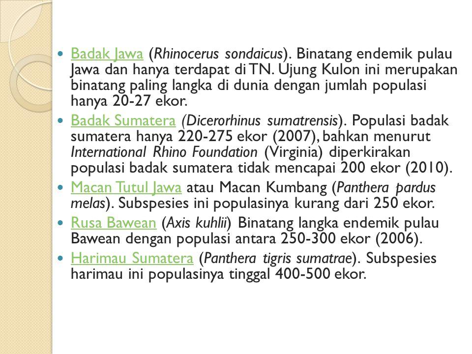 Badak Jawa (Rhinocerus sondaicus). Binatang endemik pulau Jawa dan hanya terdapat di TN. Ujung Kulon ini merupakan binatang paling langka di dunia den