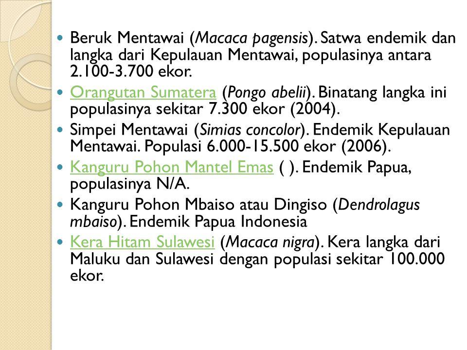 Beruk Mentawai (Macaca pagensis). Satwa endemik dan langka dari Kepulauan Mentawai, populasinya antara 2.100-3.700 ekor. Orangutan Sumatera (Pongo abe