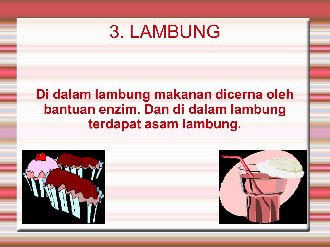3. LAMBUNG Di dalam lambung makanan dicerna oleh bantuan enzim. Dan di dalam lambung terdapat asam lambung.
