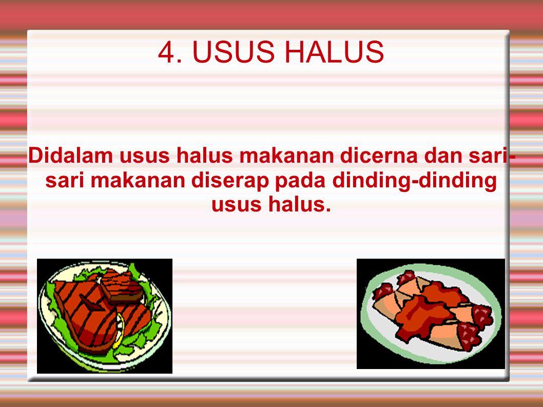 4. USUS HALUS Didalam usus halus makanan dicerna dan sari- sari makanan diserap pada dinding-dinding usus halus.