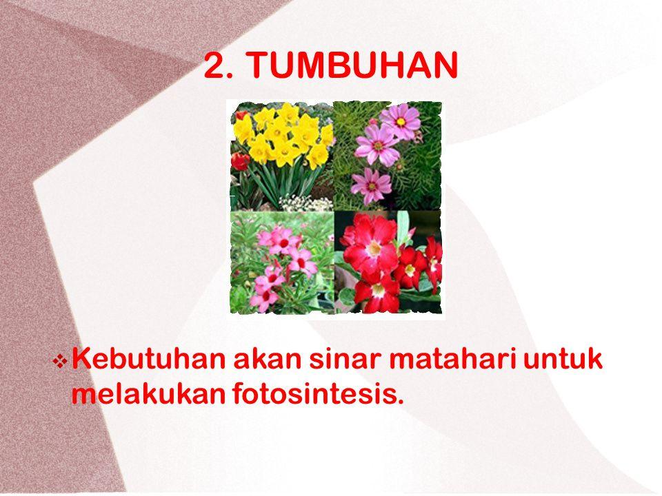 2. TUMBUHAN KKebutuhan akan sinar matahari untuk melakukan fotosintesis.
