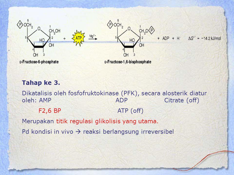 Tahap ke 3. Dikatalisis oleh fosfofruktokinase (PFK), secara alosterik diatur oleh: AMPADP Citrate (off) F2,6 BP ATP (off) Merupakan titik regulasi gl