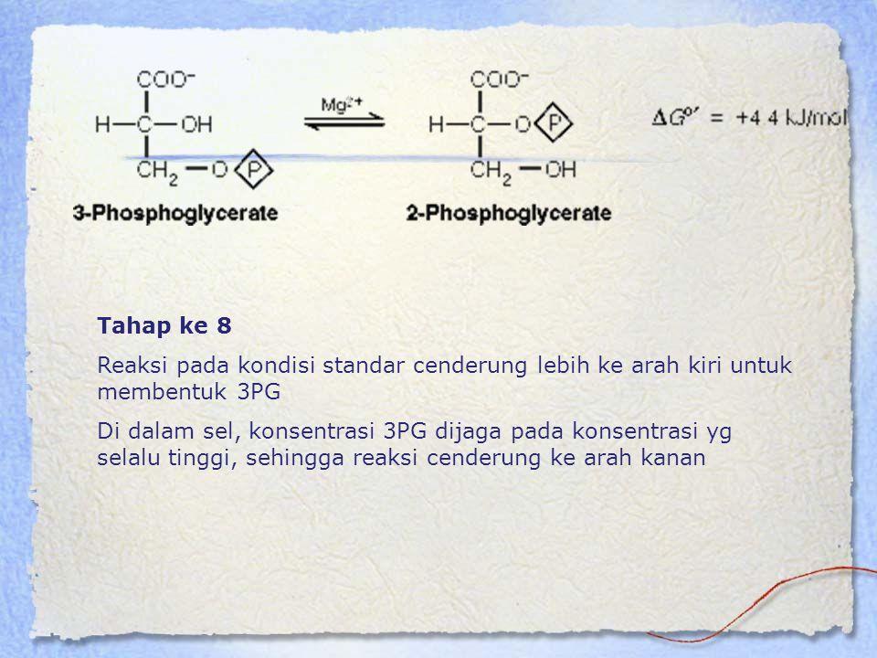 Tahap ke 8 Reaksi pada kondisi standar cenderung lebih ke arah kiri untuk membentuk 3PG Di dalam sel, konsentrasi 3PG dijaga pada konsentrasi yg selal
