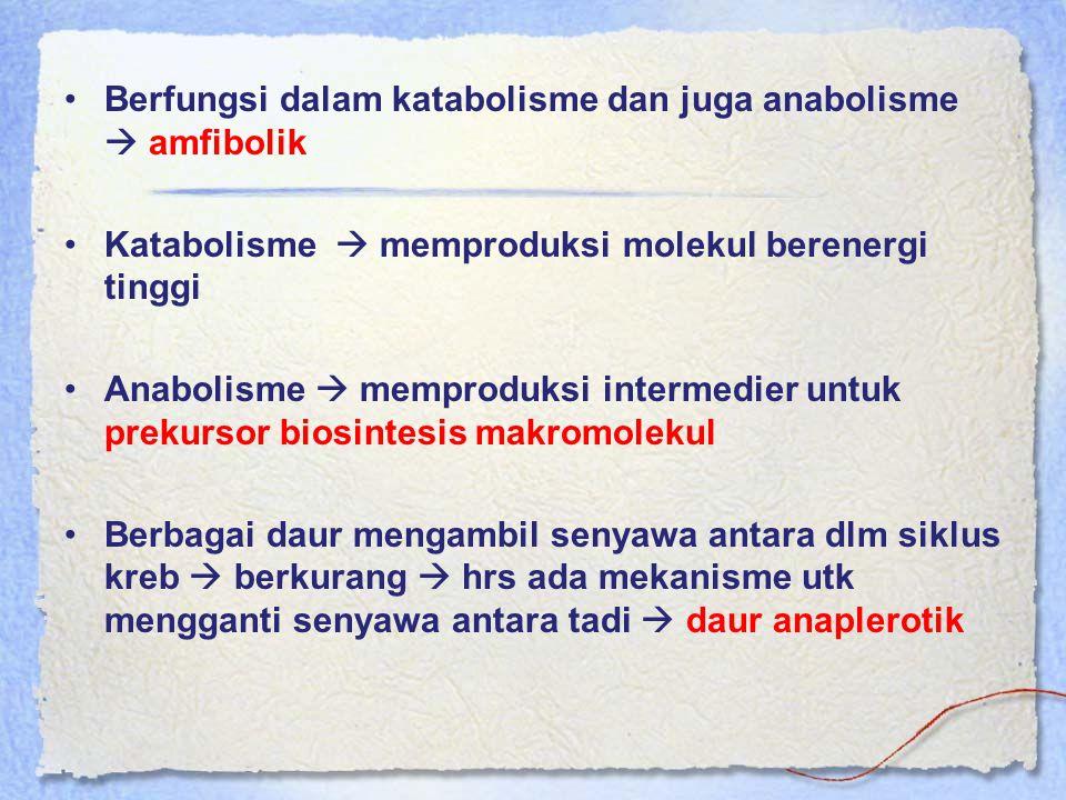 Berfungsi dalam katabolisme dan juga anabolisme  amfibolik Katabolisme  memproduksi molekul berenergi tinggi Anabolisme  memproduksi intermedier un