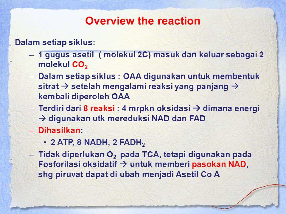 Overview the reaction Dalam setiap siklus: –1 gugus asetil ( molekul 2C) masuk dan keluar sebagai 2 molekul CO 2 –Dalam setiap siklus : OAA digunakan