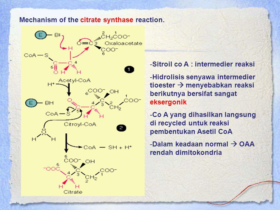 Mechanism of the citrate synthase reaction. -Sitroil co A : intermedier reaksi -Hidrolisis senyawa intermedier tioester  menyebabkan reaksi berikutny