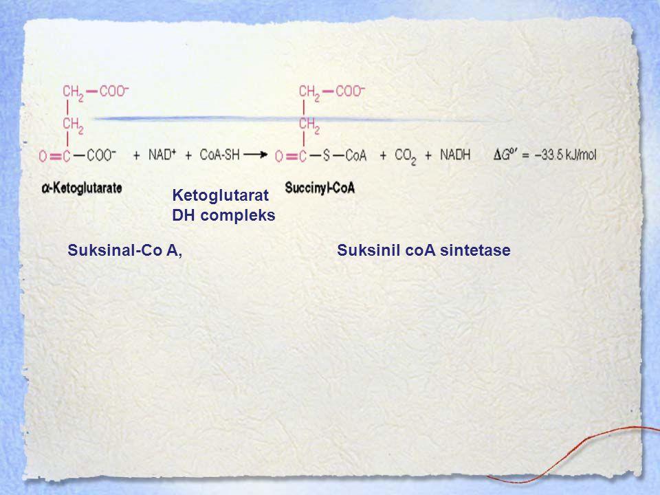 Ketoglutarat DH compleks Suksinil coA sintetaseSuksinal-Co A,
