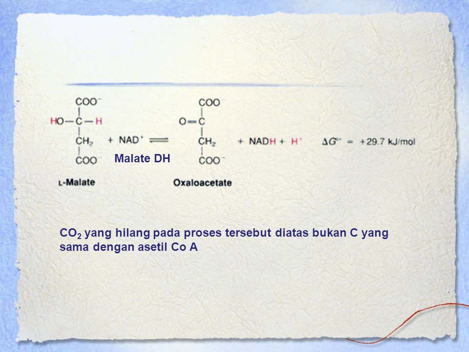 Malate DH CO 2 yang hilang pada proses tersebut diatas bukan C yang sama dengan asetil Co A