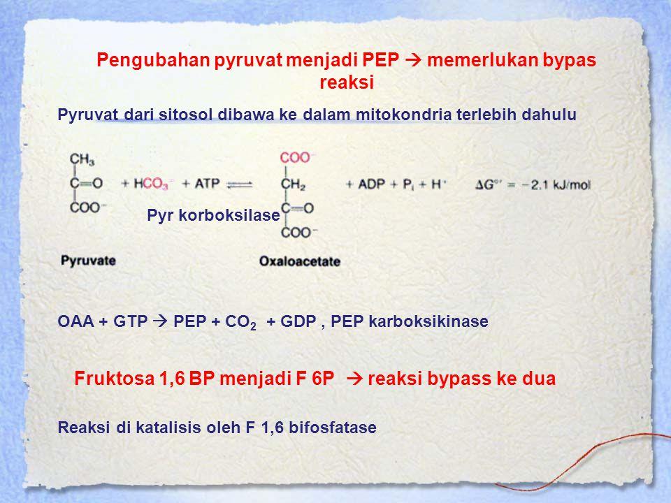Pengubahan pyruvat menjadi PEP  memerlukan bypas reaksi Pyruvat dari sitosol dibawa ke dalam mitokondria terlebih dahulu Pyr korboksilase OAA + GTP 