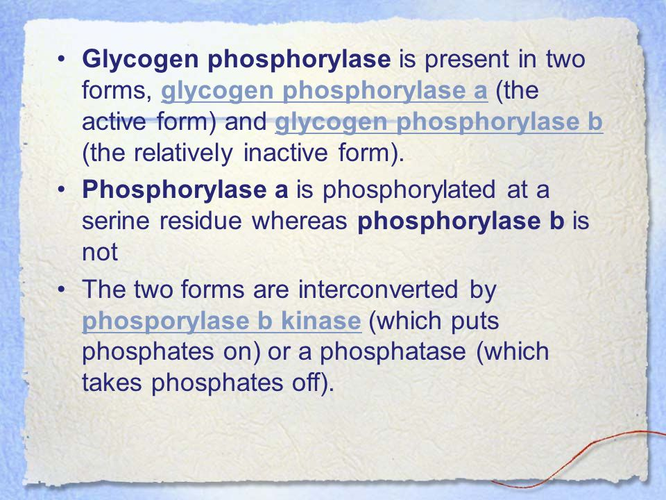 Glycogen phosphorylase is present in two forms, glycogen phosphorylase a (the active form) and glycogen phosphorylase b (the relatively inactive form).glycogen phosphorylase aglycogen phosphorylase b Phosphorylase a is phosphorylated at a serine residue whereas phosphorylase b is not The two forms are interconverted by phosporylase b kinase (which puts phosphates on) or a phosphatase (which takes phosphates off).