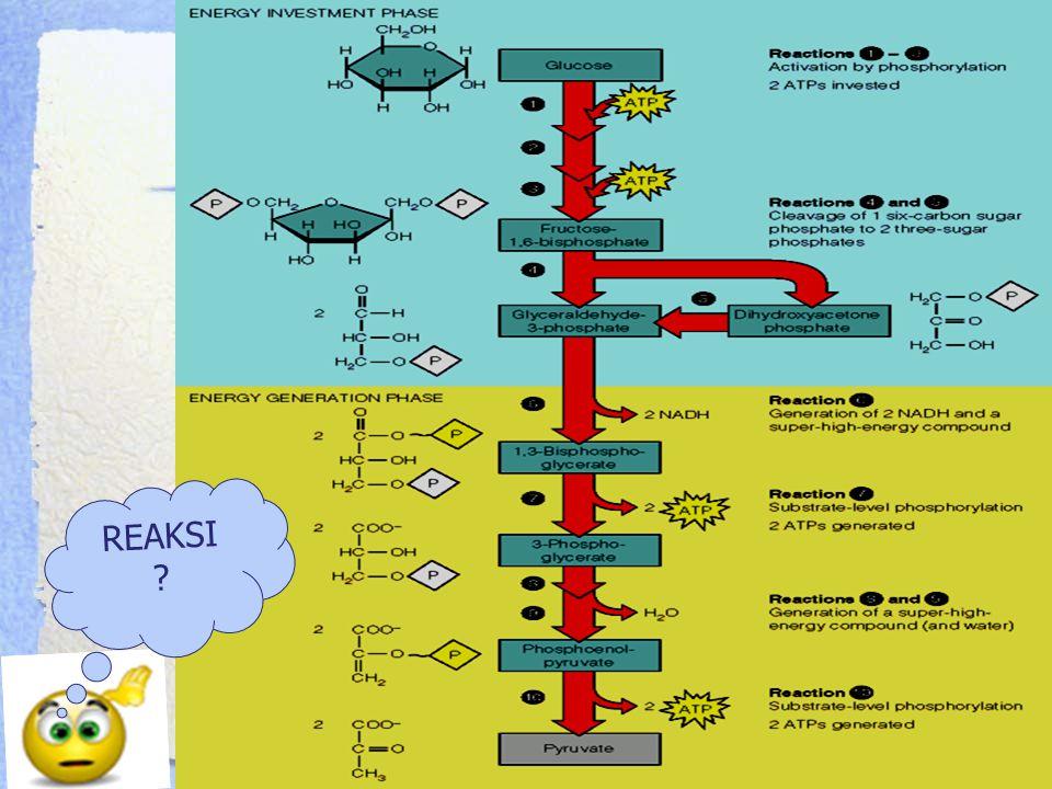 Tahap ke 9 Merupakan reaksi dehidrasi sederhana dari 2PG menjadi PEP Mempunyai efek naiknya energi hidrolisis ikatan fosfat (dr -15.6 kJ/mol dalam 2PG menjadi -61.9 kJ/mol dalam PEP ) Energi bebas tersebut digunakan utk reaksi berikutnya  fosforilasi tingkat substrat utk ADP menjadi ATP