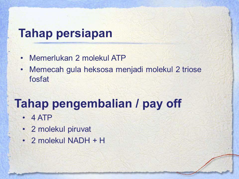 Tahap pengembalian / pay off Memerlukan 2 molekul ATP Memecah gula heksosa menjadi molekul 2 triose fosfat Tahap persiapan 4 ATP 2 molekul piruvat 2 m