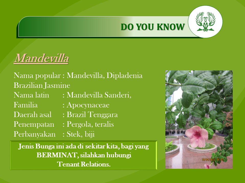 .…………… DO YOU KNOW …………… Mandevilla Jenis Bunga ini ada di sekitar kita, bagi yang BERMINAT, silahkan hubungi Tenant Relations. Nama popular: Mandevil