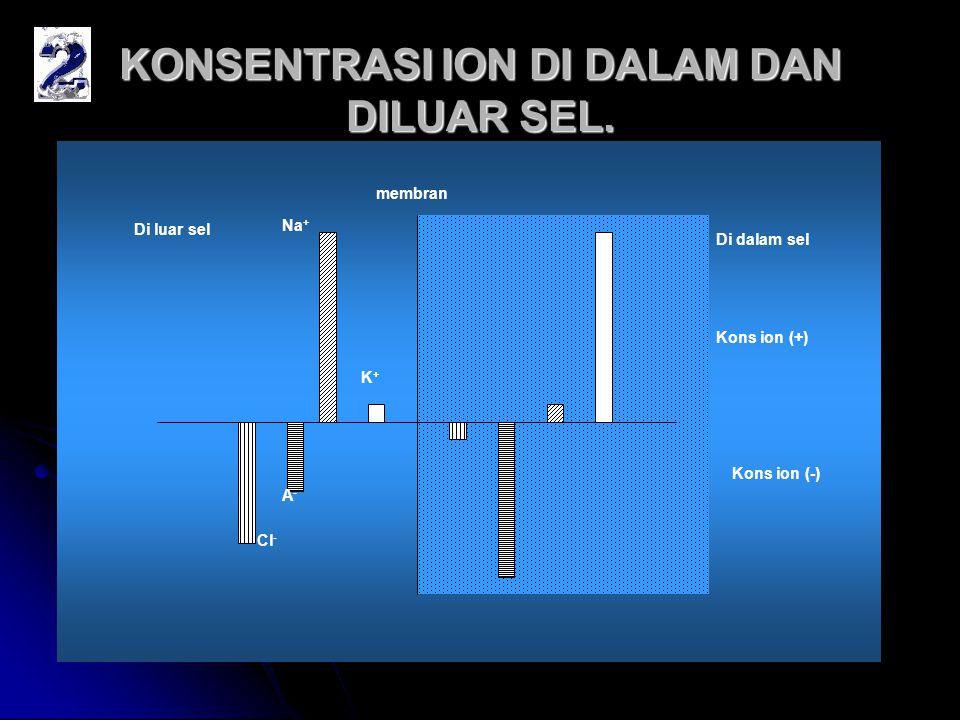 KONSENTRASI ION DI DALAM DAN DILUAR SEL. membran Di luar sel Di dalam sel Cl - A-A- Na + K+K+ Kons ion (+) Kons ion (-)