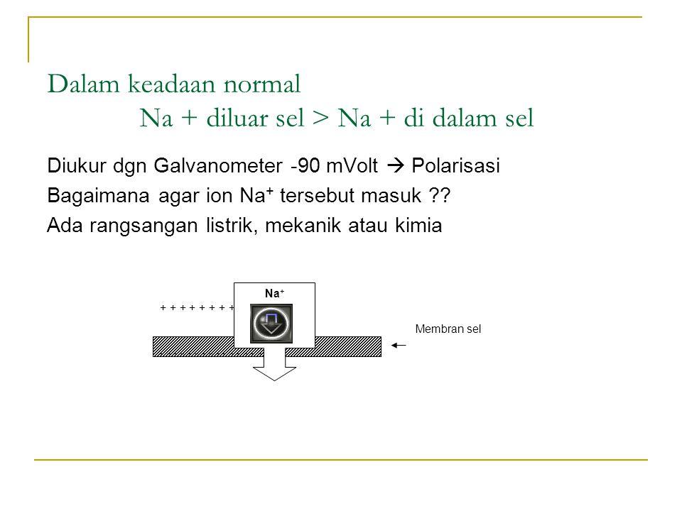 Dalam keadaan normal Na + diluar sel > Na + di dalam sel Diukur dgn Galvanometer -90 mVolt  Polarisasi Bagaimana agar ion Na + tersebut masuk ?? Ada