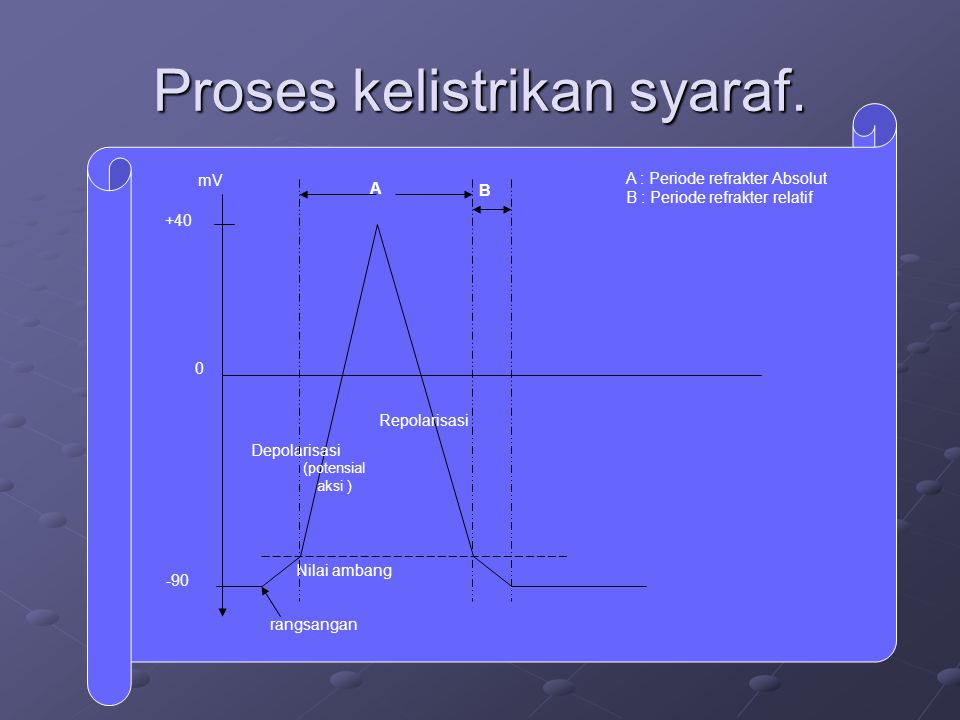 Proses kelistrikan syaraf. mV +40 -90 rangsangan Nilai ambang Depolarisasi (potensial aksi ) Repolarisasi A B A : Periode refrakter Absolut B : Period