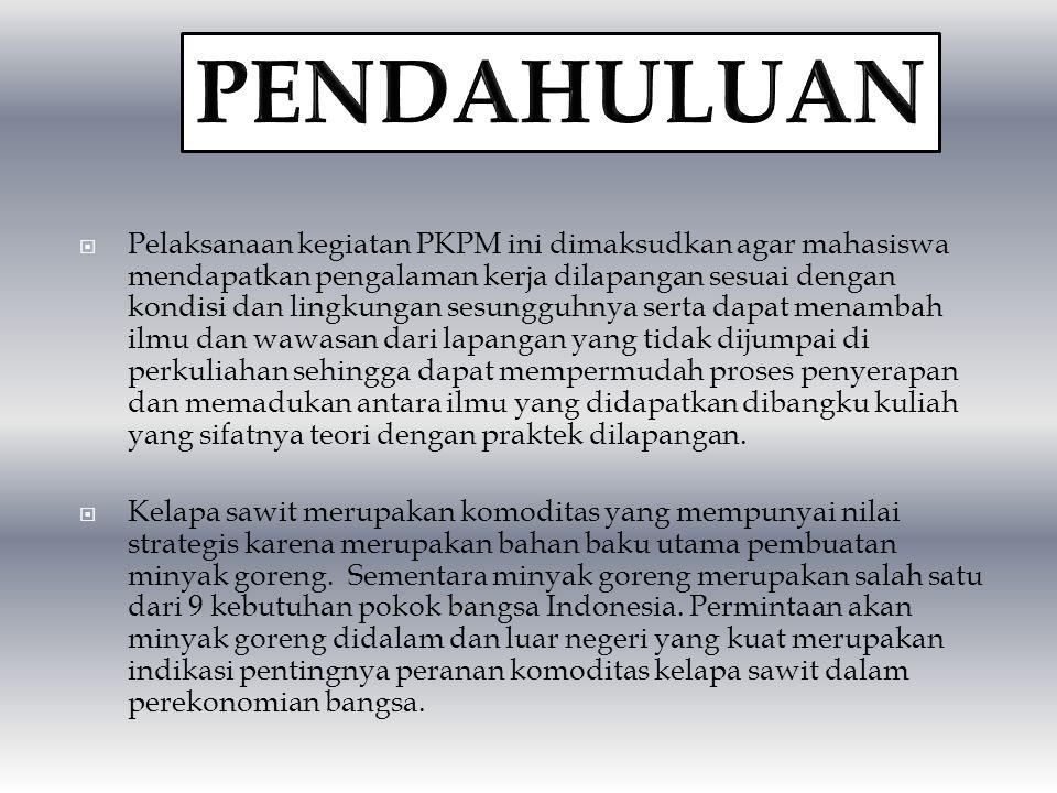 BUDIDAYA DAN PENGOLAHAN KELAPA SAWIT (Elaeis guineensis Jacq) DI PT. PP. LONDON SUMATRA INDONESIA Tbk DOLOK ESTATE Kec. LIMAPULUH – Kab. BATUBARA SUMA