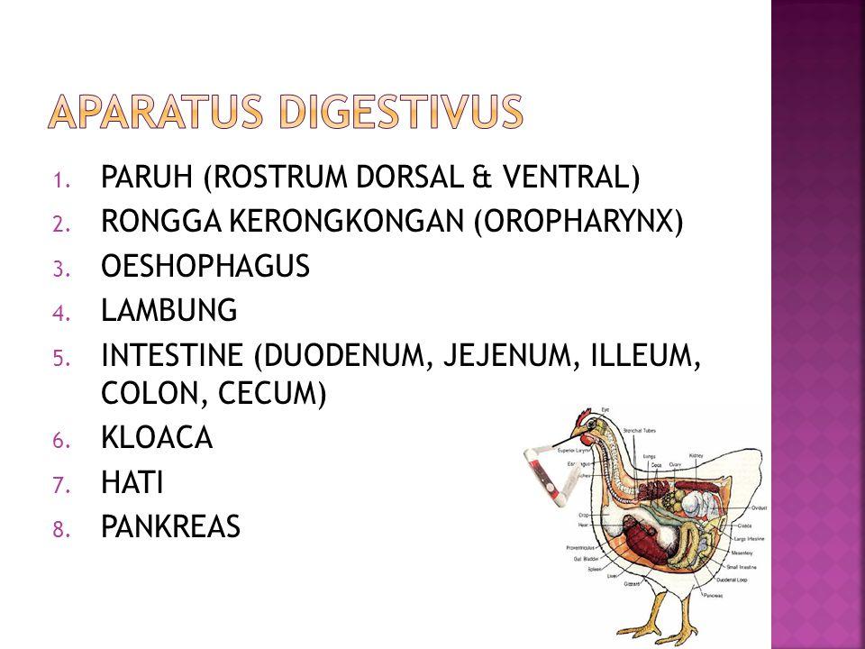 1. PARUH (ROSTRUM DORSAL & VENTRAL) 2. RONGGA KERONGKONGAN (OROPHARYNX) 3. OESHOPHAGUS 4. LAMBUNG 5. INTESTINE (DUODENUM, JEJENUM, ILLEUM, COLON, CECU