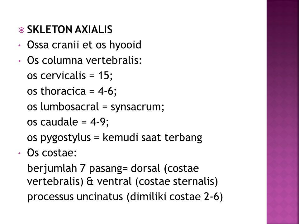  SKLETON AXIALIS Ossa cranii et os hyooid Os columna vertebralis: os cervicalis = 15; os thoracica = 4-6; os lumbosacral = synsacrum; os caudale = 4-