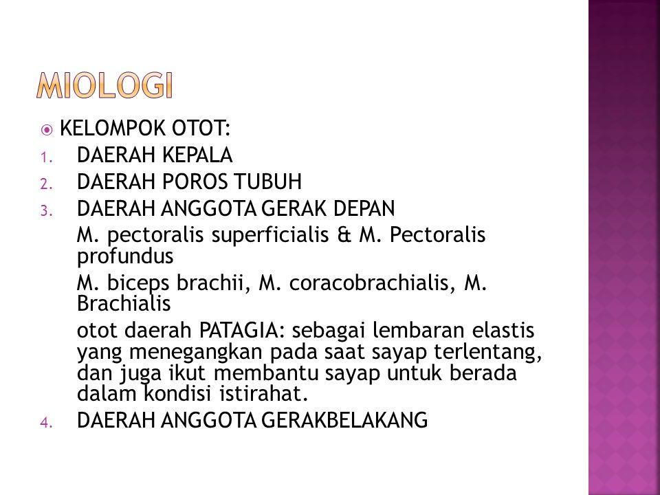  KELOMPOK OTOT: 1. DAERAH KEPALA 2. DAERAH POROS TUBUH 3. DAERAH ANGGOTA GERAK DEPAN M. pectoralis superficialis & M. Pectoralis profundus M. biceps