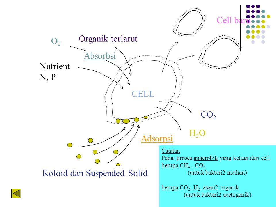 CO 2 H2OH2O Cell baru Absorbsi Adsorpsi Organik terlarut O2O2 Nutrient N, P Koloid dan Suspended Solid CELL Catatan Pada proses anaerobik yang keluar