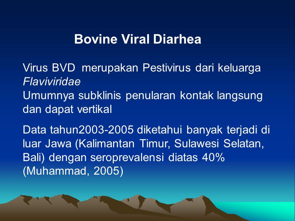 Bovine Viral Diarhea Virus BVD merupakan Pestivirus dari keluarga Flaviviridae Umumnya subklinis penularan kontak langsung dan dapat vertikal Data tah