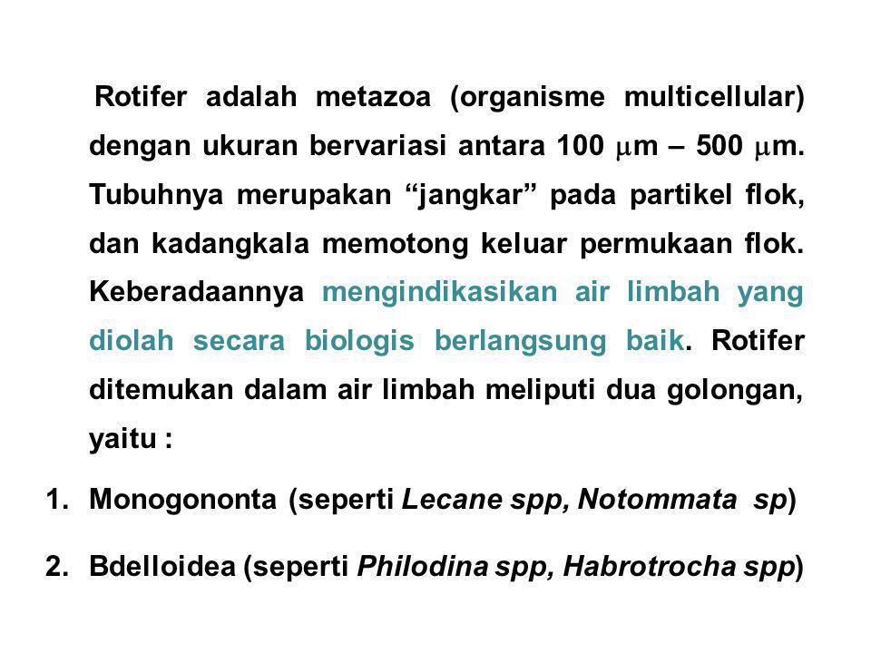"Rotifer adalah metazoa (organisme multicellular) dengan ukuran bervariasi antara 100  m – 500  m. Tubuhnya merupakan ""jangkar"" pada partikel flok, d"