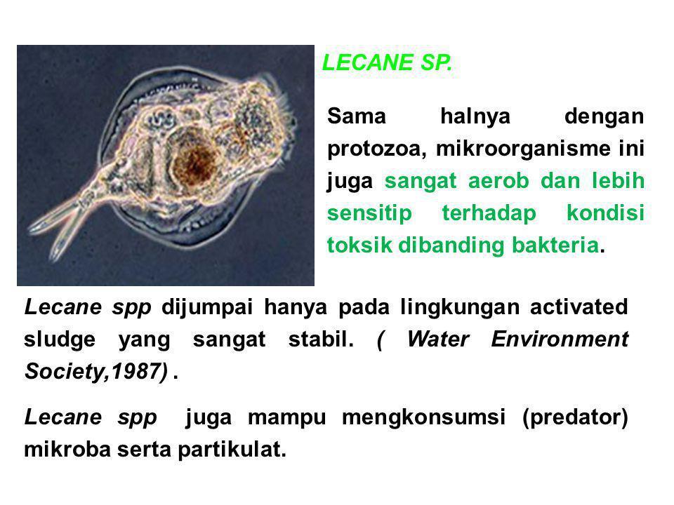 Sama halnya dengan protozoa, mikroorganisme ini juga sangat aerob dan lebih sensitip terhadap kondisi toksik dibanding bakteria. Lecane spp dijumpai h