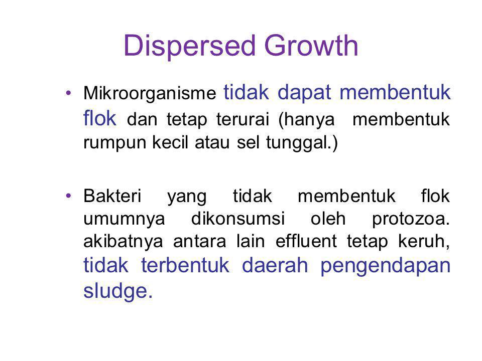 Dispersed Growth Mikroorganisme tidak dapat membentuk flok dan tetap terurai (hanya membentuk rumpun kecil atau sel tunggal.) Bakteri yang tidak membe