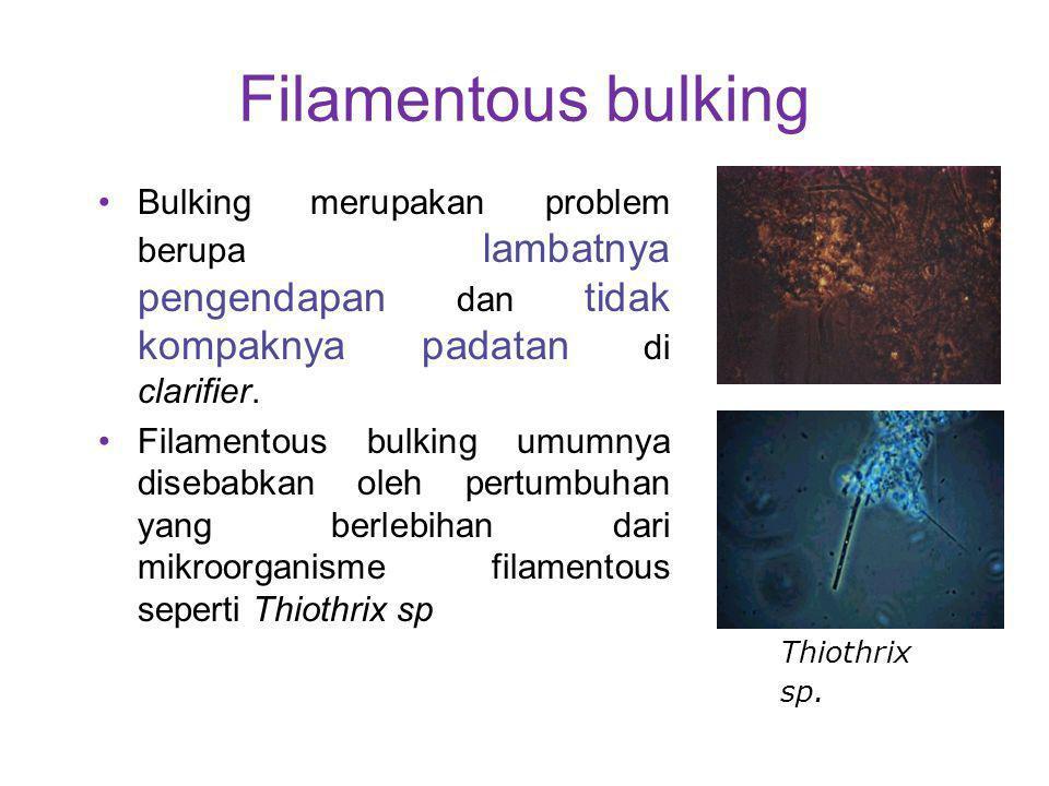 Filamentous bulking Bulking merupakan problem berupa lambatnya pengendapan dan tidak kompaknya padatan di clarifier. Filamentous bulking umumnya diseb