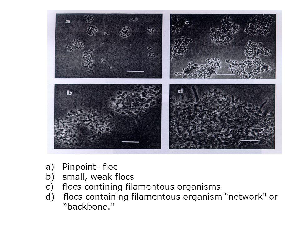 "a)Pinpoint- floc b)small, weak flocs c)flocs contining filamentous organisms d) flocs containing filamentous organism ""network"