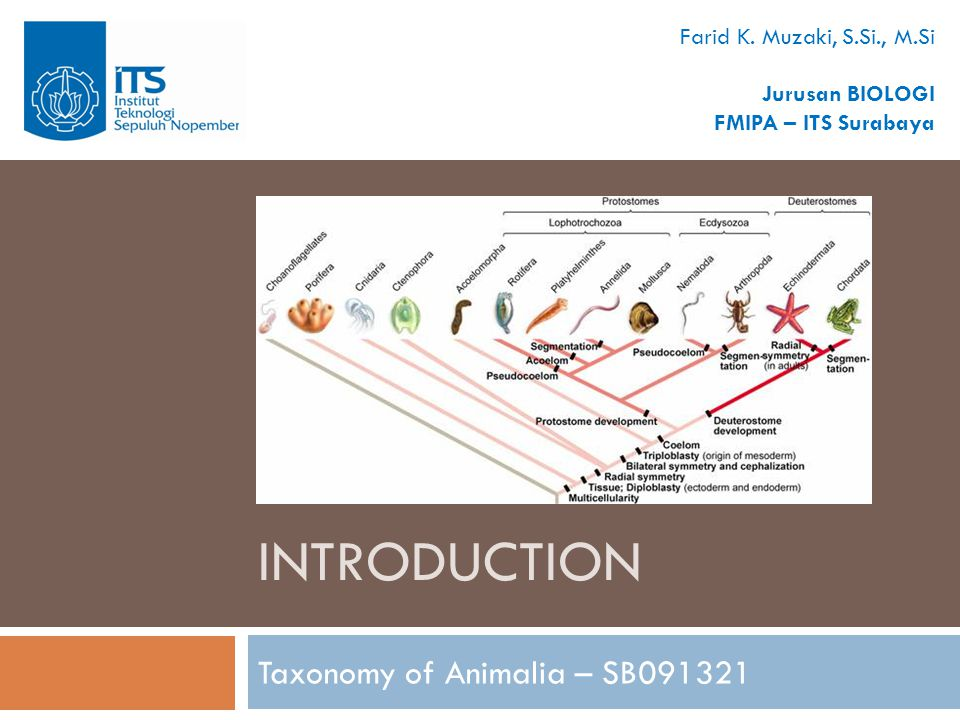 INTRODUCTION Taxonomy of Animalia – SB091321 Farid K. Muzaki, S.Si., M.Si Jurusan BIOLOGI FMIPA – ITS Surabaya