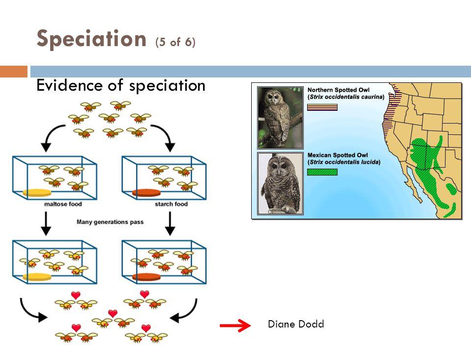 Evidence of speciation Speciation (5 of 6) Diane Dodd