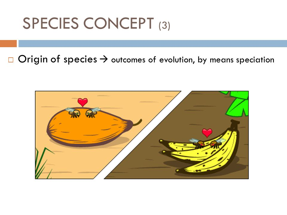  Origin of species  outcomes of evolution, by means speciation SPECIES CONCEPT (3)