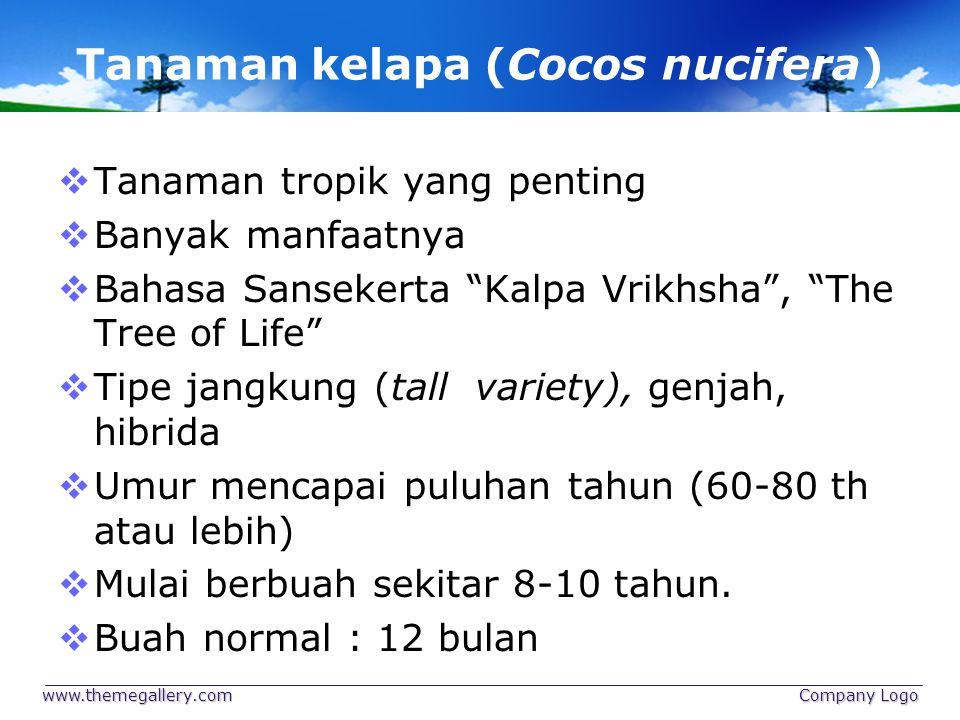 """Tanaman kelapa (Cocos nucifera)  Tanaman tropik yang penting  Banyak manfaatnya  Bahasa Sansekerta """"Kalpa Vrikhsha"""", """"The Tree of Life""""  Tipe jang"""