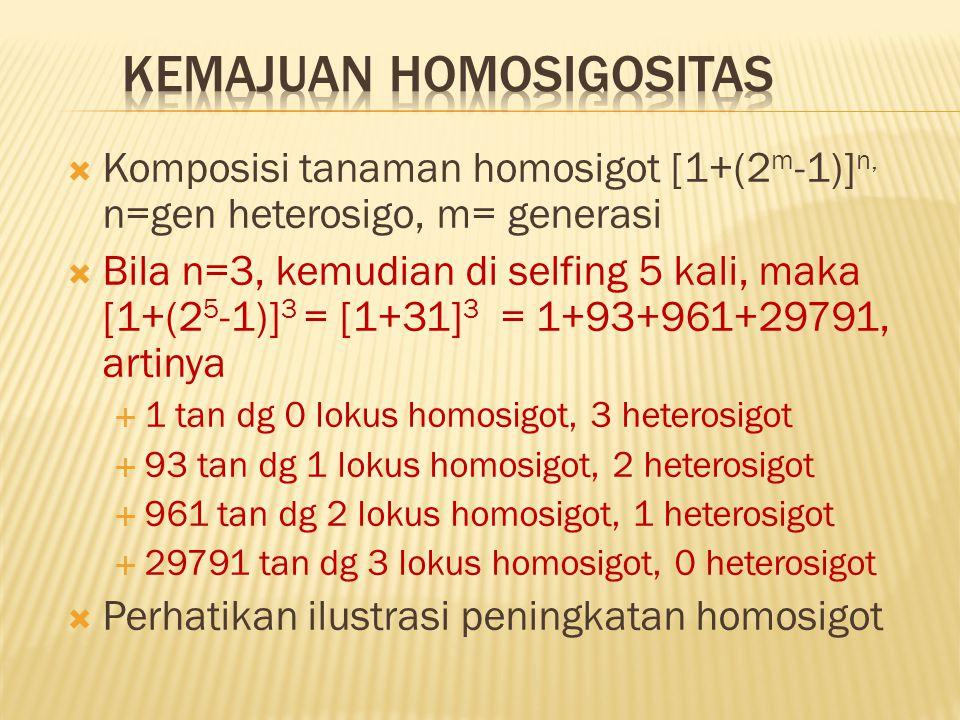  Komposisi tanaman homosigot [1+(2 m -1)] n, n=gen heterosigo, m= generasi  Bila n=3, kemudian di selfing 5 kali, maka [1+(2 5 -1)] 3 = [1+31] 3 = 1