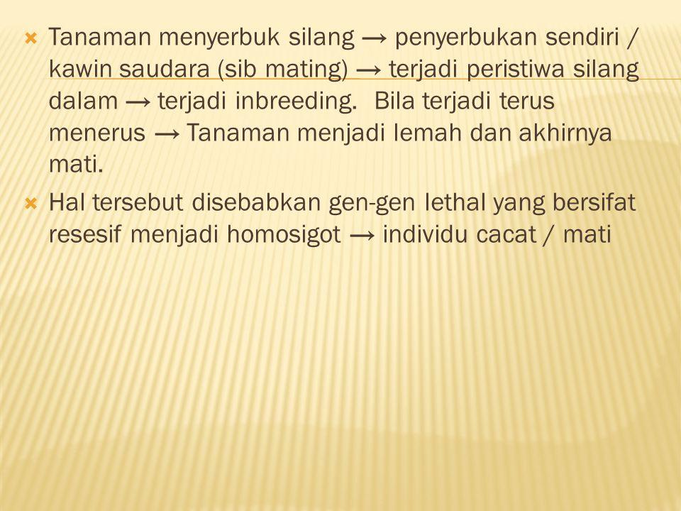  Tanaman menyerbuk silang → penyerbukan sendiri / kawin saudara (sib mating) → terjadi peristiwa silang dalam → terjadi inbreeding. Bila terjadi teru