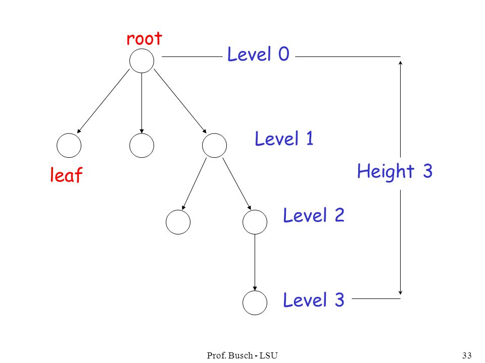 Prof. Busch - LSU33 root leaf Level 0 Level 1 Level 2 Level 3 Height 3