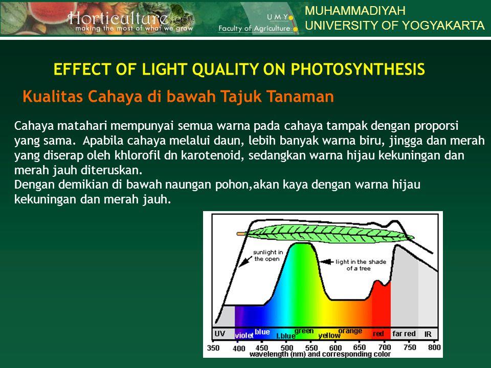 MUHAMMADIYAH UNIVERSITY OF YOGYAKARTA EFFECT OF LIGHT QUALITY ON PHOTOSYNTHESIS Kualitas Cahaya di bawah Tajuk Tanaman Cahaya matahari mempunyai semua warna pada cahaya tampak dengan proporsi yang sama.
