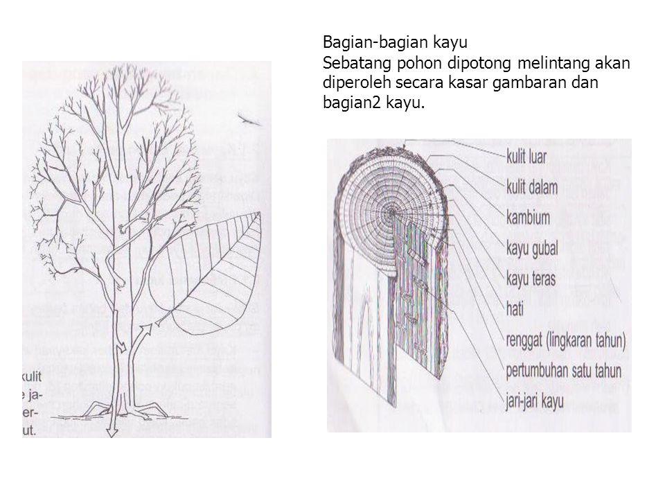 Bagian-bagian kayu Sebatang pohon dipotong melintang akan diperoleh secara kasar gambaran dan bagian2 kayu.