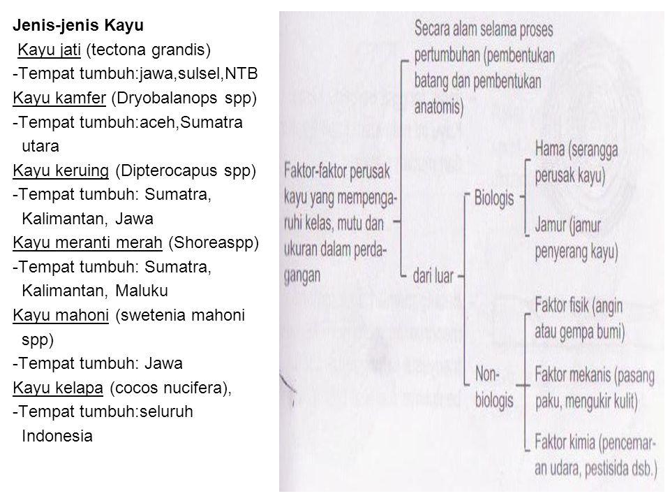Jenis-jenis Kayu Kayu jati (tectona grandis) -Tempat tumbuh:jawa,sulsel,NTB Kayu kamfer (Dryobalanops spp) -Tempat tumbuh:aceh,Sumatra utara Kayu keru