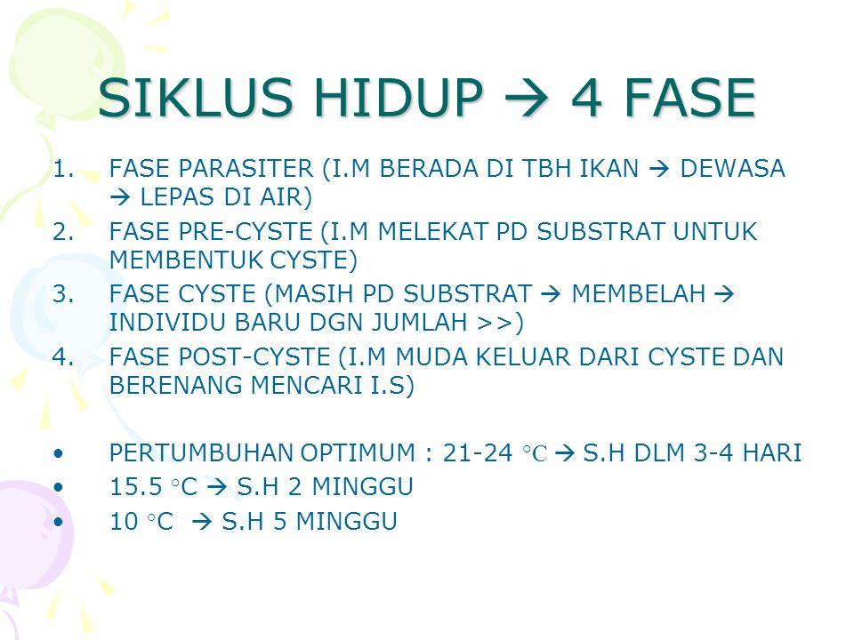SIKLUS HIDUP  4 FASE 1.FASE PARASITER (I.M BERADA DI TBH IKAN  DEWASA  LEPAS DI AIR) 2.FASE PRE-CYSTE (I.M MELEKAT PD SUBSTRAT UNTUK MEMBENTUK CYSTE) 3.FASE CYSTE (MASIH PD SUBSTRAT  MEMBELAH  INDIVIDU BARU DGN JUMLAH >>) 4.FASE POST-CYSTE (I.M MUDA KELUAR DARI CYSTE DAN BERENANG MENCARI I.S) PERTUMBUHAN OPTIMUM : 21-24 ° C  S.H DLM 3-4 HARI 15.5 °C  S.H 2 MINGGU 10 °C  S.H 5 MINGGU