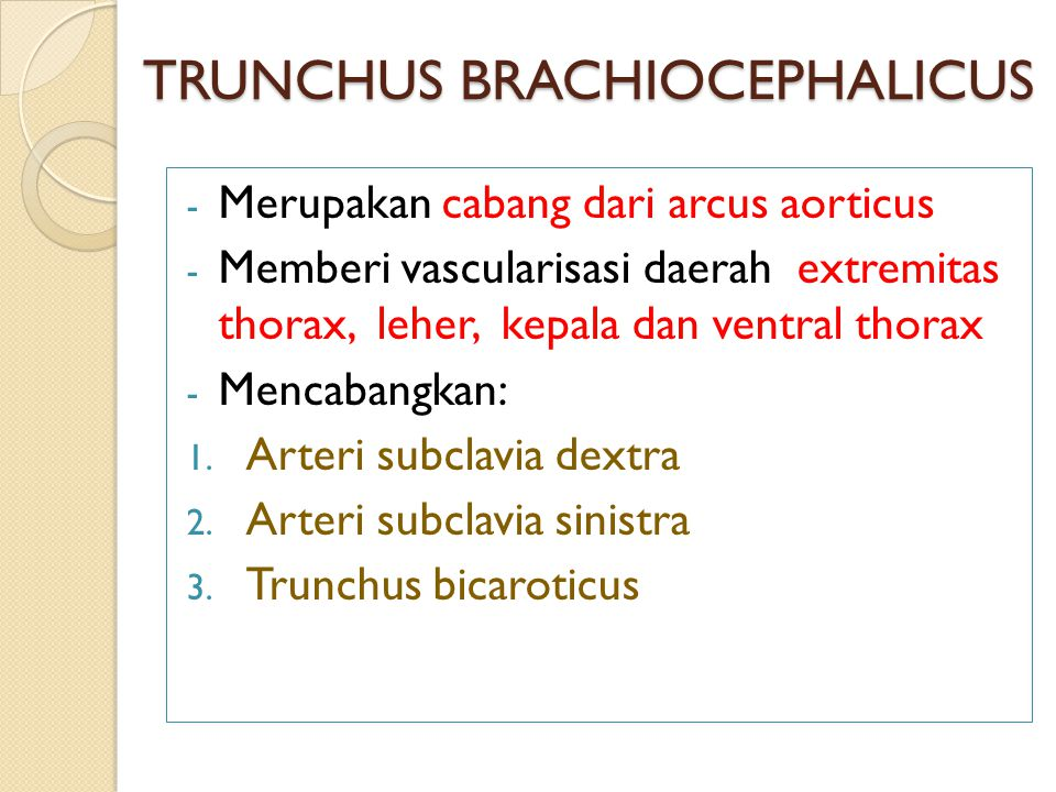 TRUNCHUS BRACHIOCEPHALICUS - Merupakan cabang dari arcus aorticus - Memberi vascularisasi daerah extremitas thorax, leher, kepala dan ventral thorax - Mencabangkan: 1.