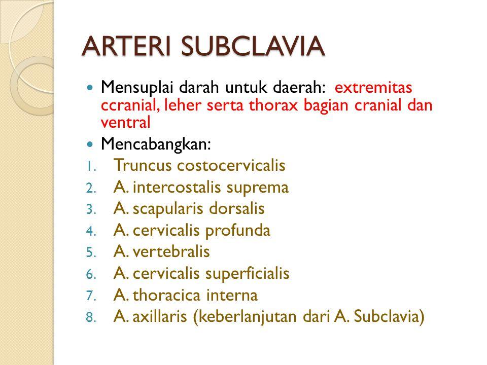 ARTERI SUBCLAVIA Mensuplai darah untuk daerah: extremitas ccranial, leher serta thorax bagian cranial dan ventral Mencabangkan: 1. Truncus costocervic