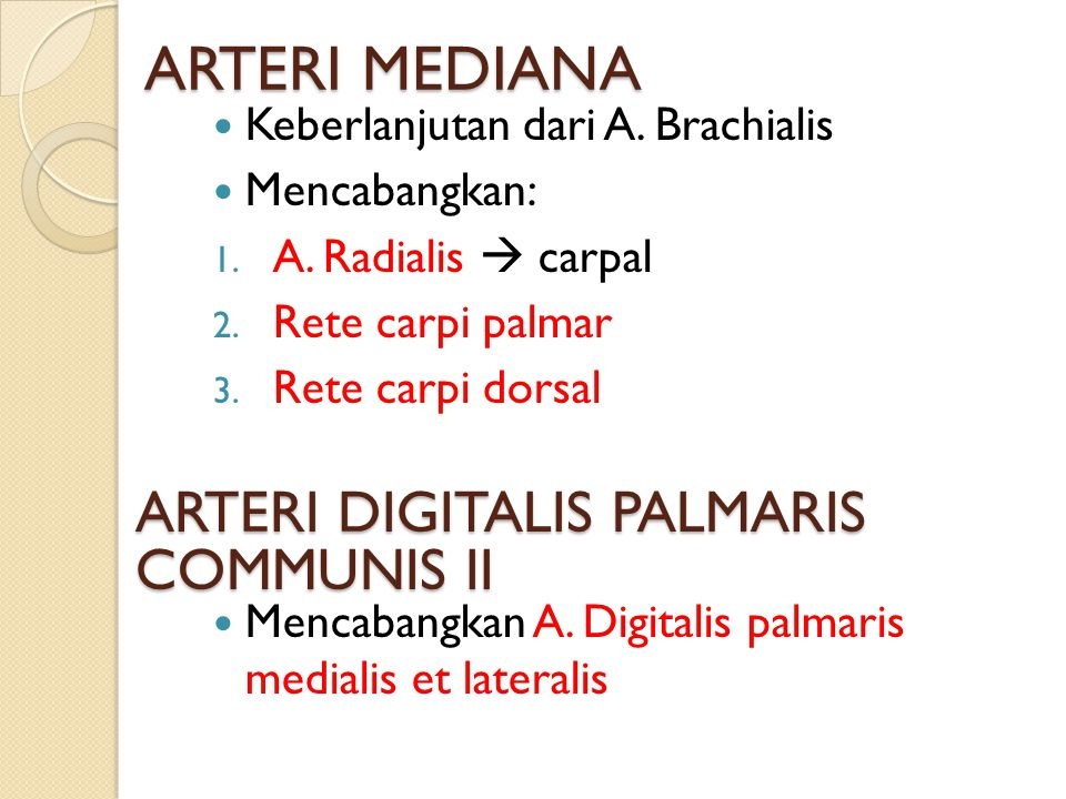 ARTERI MEDIANA Keberlanjutan dari A. Brachialis Mencabangkan: 1. A. Radialis  carpal 2. Rete carpi palmar 3. Rete carpi dorsal ARTERI DIGITALIS PALMA