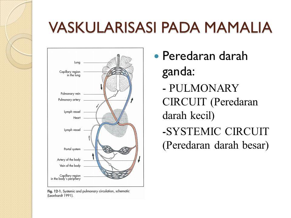 VASKULARISASI PADA MAMALIA Peredaran darah ganda: - PULMONARY CIRCUIT (Peredaran darah kecil) - SYSTEMIC CIRCUIT (Peredaran darah besar)